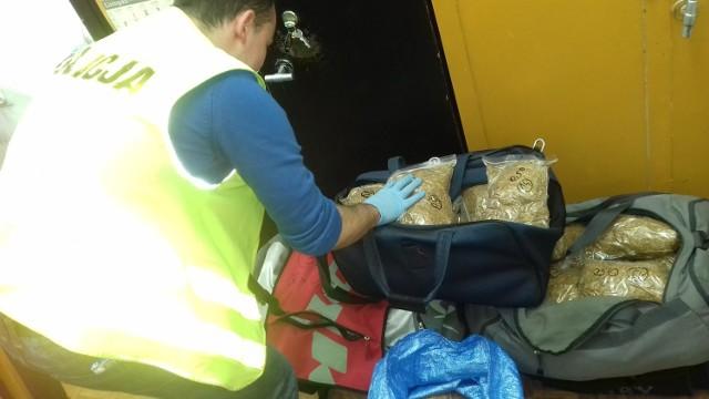 Policjanci z Chełmna znaleźli u bydgoszczanina 55 kilogramów tytoniu bez polskich znaków akcyzy.