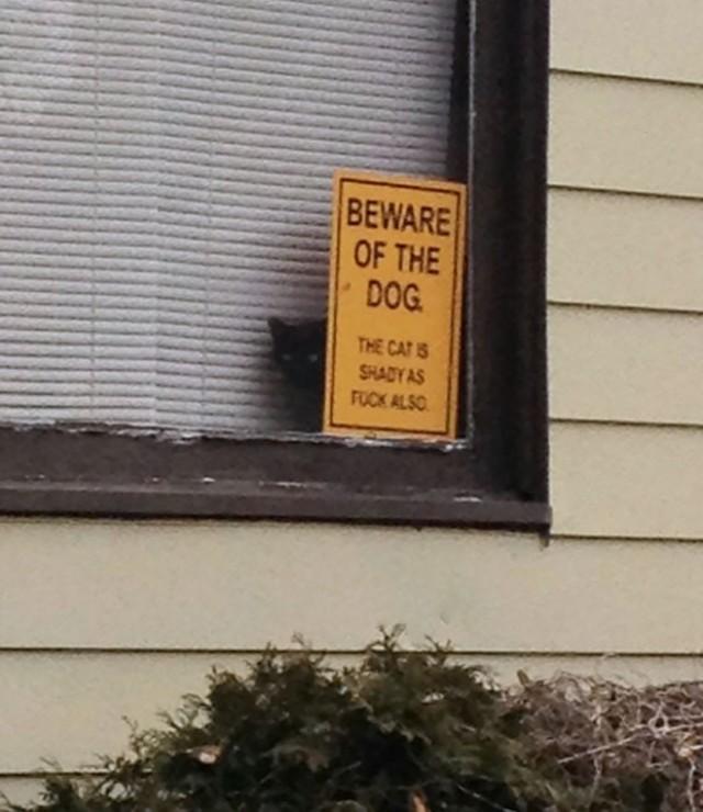 Uwaga, zły pies? Te zwierzęta przeczą stereotypom [ZDJĘCIA]