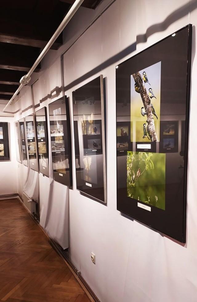 """""""Starsi panowie dwaj... za obiektywem"""" to wystawa zdjęć autorstwa Andrzeja Iwanowskiego i Leszka Szóstaka, która została jako pierwsza w dziejach Muzeum w Brodnicy otwarta wirtualnie. W czasie spotkania autorzy opowiadali m.in. o początkach swojej wspólnej przygody z fotografią oraz zasadach robienia tak świetnych zdjęć. Przedstawiamy efekty ich - jak sami przyznali - niezbędnej do robienia zdjęć wiedzy, m.in. dotyczącej zachowań ptaków. Wystawę można także zobaczyć osobiście w Bramie Chełmińskiej, jednak - z uwagi na obowiązujące obostrzenia - zalecana jest wcześniejsza rezerwacja pod numerem tel. 566-498-252."""
