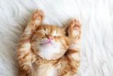 Te rasy kotów są najpiękniejsze. Zobacz najśliczniejsze koty z całego świata [Galeria kotów]