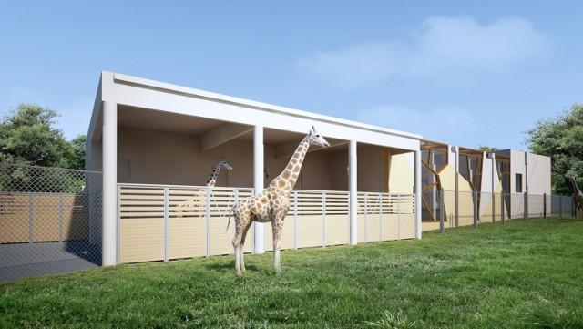 Tak ma wyglądać nowy wybieg dla żyraf.   Zobacz więcej wizualizacji --->