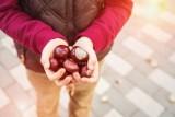 Czy kasztany naprawdę wpływają na zdrowie?