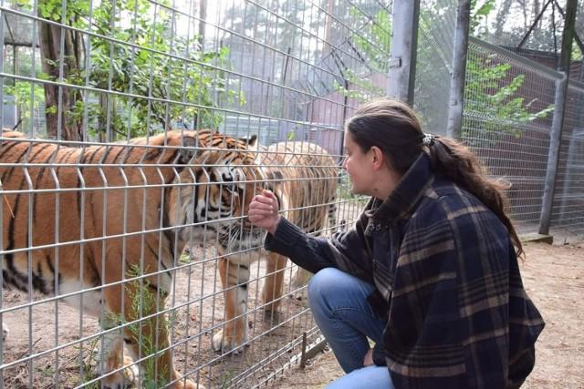 - Stanowczo obalam tezę, jakoby mocz tygrysa leczył z czegokolwiek, nawet kataru nie zgubiłam, a zasikana zostałam od stóp do głów - napisała Ewa Zgrabczyńska.