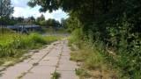 Na ul. Popiełuszki mają zarośnięte chodniki. Interweniował mieszkaniec Wieniawy