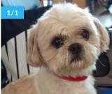 Zobacz galerię najpiękniejszych psów z powiatu kościerskiego. Oto nasze gwiazdy [ZDJĘCIA]