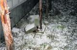 Śledztwo w sprawie zabicia psa trwa