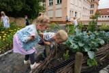 Społeczne Ogrody powstają w Bydgoszczy [zobacz zdjęcia]