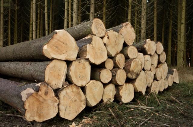 Przeciwnicy nowej ustawy obawiają się, że zwiększy ona wycinkę lasów w Polsce.
