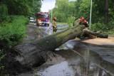 O krok od tragedii! Drzewo runęło na jezdnię przy szkole na Zalesiu we Wrocławiu [ZDJĘCIA]