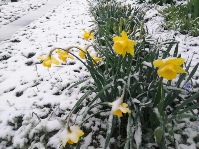 Śnieg w połowie kwietnia to rzadkość.