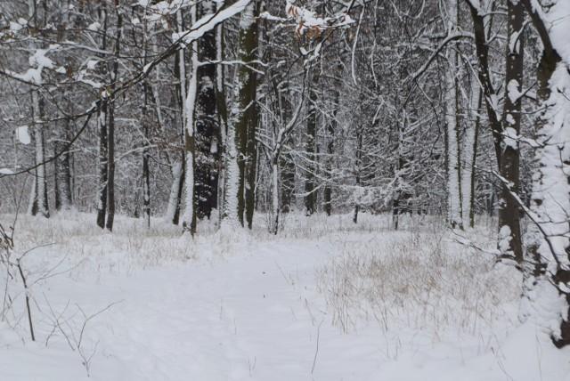 W weekend zapowiadane jest ochłodzenie na Śląsku