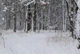 Zima zagościła na Śląsku. IMGW ostrzega przed silnymi mrozami. Nawet 19 stopni Celsjusza poniżej zera