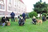 Ćwiczenia przewodników z psami służbowymi prowadzono w sztumskim Zakładzie Karnym