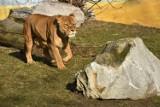 Zoo w Zamościu wkrótce zaprosi do zwiedzania. Czy jednak na pewno to nastąpi? Sprawdź, co może pokrzyżować plany