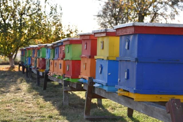 Pszczoły mają pracowity sezon. Po zimnej wiośnie przyroda nadrobiła zaległości, wiele roślin zakwitło w tym samym czasie