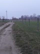 Gmina Czermin. 200 drzew miododajnych posadzono w 4 miejscowościach