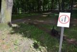 W zielonogórskich parkach pojawiły się pewne znaki i grafiki. Ostrzegają przed spadającymi gałęziami? Co to za pomysł?