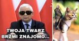 MEMY. Prezes ogłosił stan kościelny? Internauci komentują słowa Kaczyńskiego