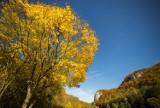 Niezwykła złota polska jesień w Dolinie Będkowskiej [GALERIA]