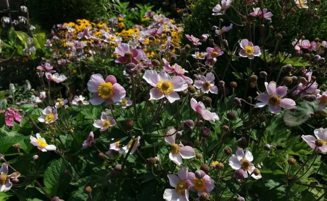 Większość roślin lubi lekko kwaśną ziemię. Ale są też takie, które najlepiej rosną na ziemi zasadowej lub o obojętnym odczynie.