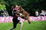 Wrocław. Latające psy w Parku Południowym. Zobacz zdjęcia