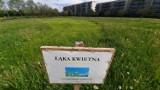 Łąki kwietne w Gorzowie? Znajdziecie je choćby w parku 750-lecia. Zapraszamy na spacer!
