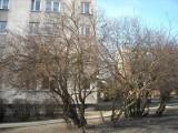 Nad Potokiem: Bunt mieszkańców w sprawie wycinki drzew [ZDJĘCIA]