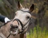 Ukradł weterynarzowi lek dla... konia