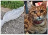 Wyrzucił z samochodu karmiącą kotkę. W foliowym worku zawiązanym drutem. Zwierzę zostało uratowane w ostatniej chwili