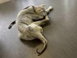 Obrońcy zwierząt odebrali lekarzom z Wałbrzycha psa. Właściciele zaalarmowali policję, mówią o nocnym włamaniu