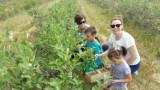 Tarnów. Internetowy portal z Tarnowa kojarzy plantatorów i amatorów tanich owoców. Ceny na straganach już nie przerażają
