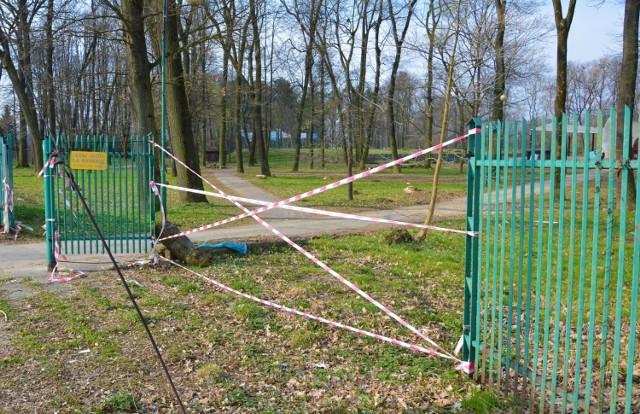 W Parku Strzeleckim wycięto kilkaset drzew