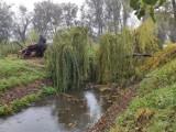 Silny wiatr połamał drzewa w parku miejskim i na Łazienkach [ZDJĘCIA]