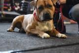 TOP 10 najpopularniejszych ras psów w Polsce. Które rasy psów Polacy najbardziej uwielbiają? [GALERIA]  [17.05.2021]