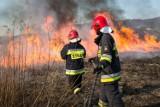 Gorlice. O podpaleniach łąk strażacy mówią: to zwyczajne akty terroru. Mimo apeli o rozsądek interwencjom nie ma końca