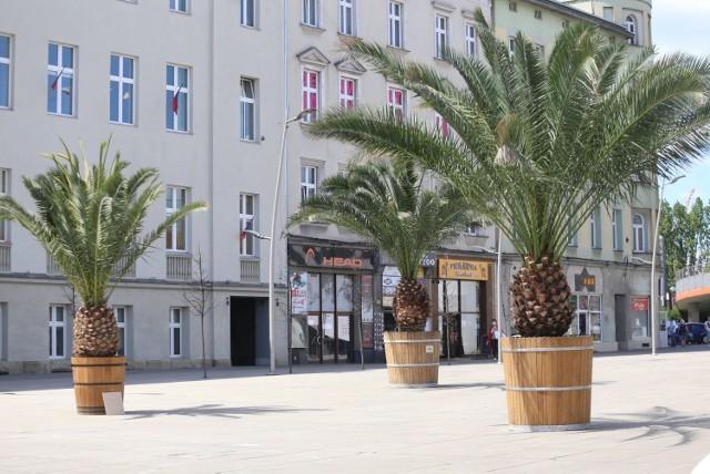 Wkrótce palmy będą musiały zniknąć z chorzowskiego rynku