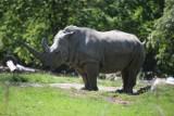 Adopcja zwierząt ze śląskiego zoo. Zaadoptować można żyrafę, lwa, nosorożca, kangura czy wielbłąda