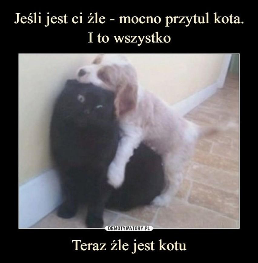 Dzisiaj wielkie święto - dzień kota! Zobacz memy, które rozbawią cię do łez. Te koty poprawią humor każdemu [17.02.2021]