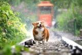 Gdzie w Krakowie wyjść na spacer z psem? Miejsc nie brakuje!