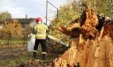Potężna wichura w Gorzowie. Silny wiatr łamie gałęzie i drzewa