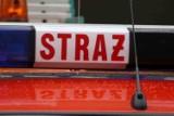 Straż Pożarna w Wodzisławiu: strażacy usuwali gniazda owadów