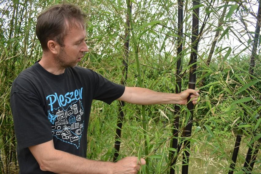 Andrzej Sobkowiak i jego ogród pełen egzotycznych roślin