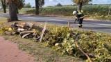Mieścisko. Strażacy usuwali powalone na jezdnię drzewo