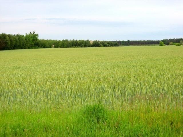 To obszar, którego sporą część miałaby zająć ferma
