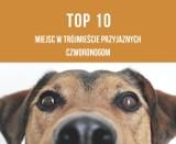 TOP 10 miejsc przyjaznych czworonogom w Trójmieście [galeria]