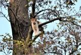 Sławno: Kocie kłopoty na wysokości. Zobaczcie, gdzie utknął kociak - Romek [ZDJĘCIA] - 2019 r.