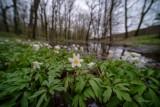 Tarnów. W rezerwacie Debrza przyroda budzi się do życia i zachęca do spacerowania. Przyrodnicza perełka w granicach Tarnowa [ZDJĘCIA]
