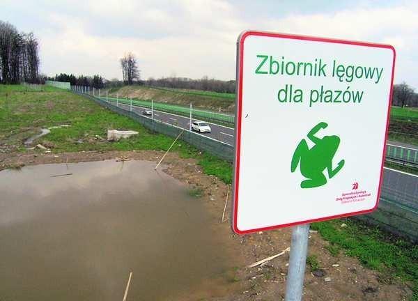Miejsca lęgowe dla płazów w rejonie rezerwatu Morzyk są oznaczone specjalnymi tablicami