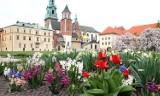 Kraków. Miejsca, które najładniej wyglądają wiosną. Wiosna eksponuje całe ich piękno i urok! Byliście w każdym z nich?