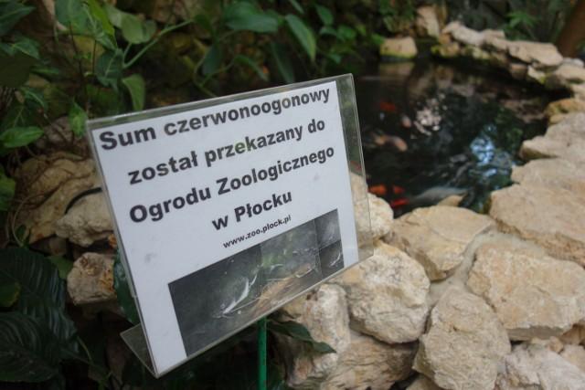 Franek pożegnał Łódź i wyjechał do płockiego ogrodu